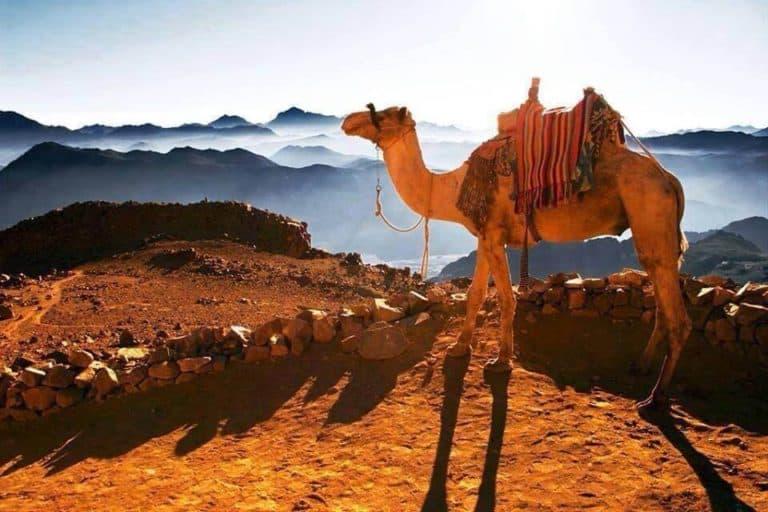 mount sinai from cairo