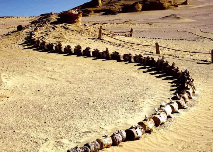tour to wadi hitan from cairo